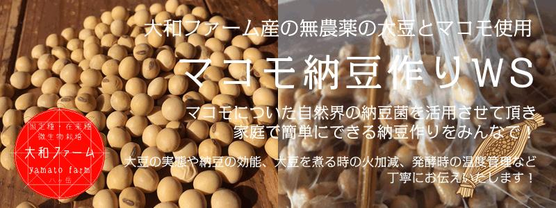 マコモ納豆作り